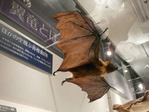 世界最大の翼竜展