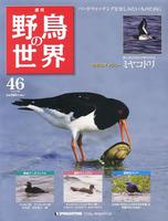 週刊野鳥の世界 第46号 ミヤコドリ