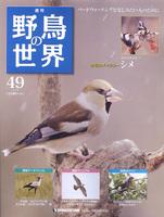 週刊野鳥の世界 第49号 シメ