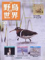 週刊野鳥の世界 第50号 タマシギ