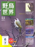 週刊野鳥の世界 第51号 アオゲラ