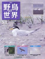 週刊野鳥の世界 第53号 コアジサシ