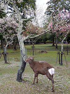 奈良県奈良市