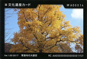 青蓮寺の大銀杏