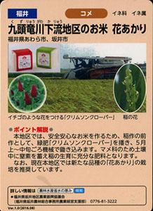 福井 九頭竜川下流地区のお米 花あかり