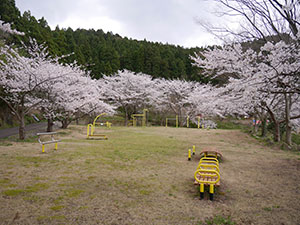 福井市ガラガラ山水仙の里キャンプ場 さくらカード
