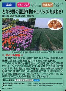 富山 となみ野の園芸作物(チューリップ、たまねぎ)