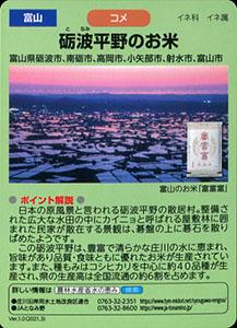 富山 砺波平野のお米