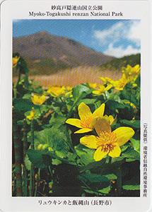 妙高戸隠連山国立公園 リュウキンカと飯綱山