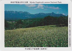 妙高戸隠連山国立公園 そば畑と戸隠連峰