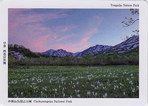 中部山岳国立公園 早春栂池自然園