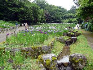 卯辰山 菖蒲園